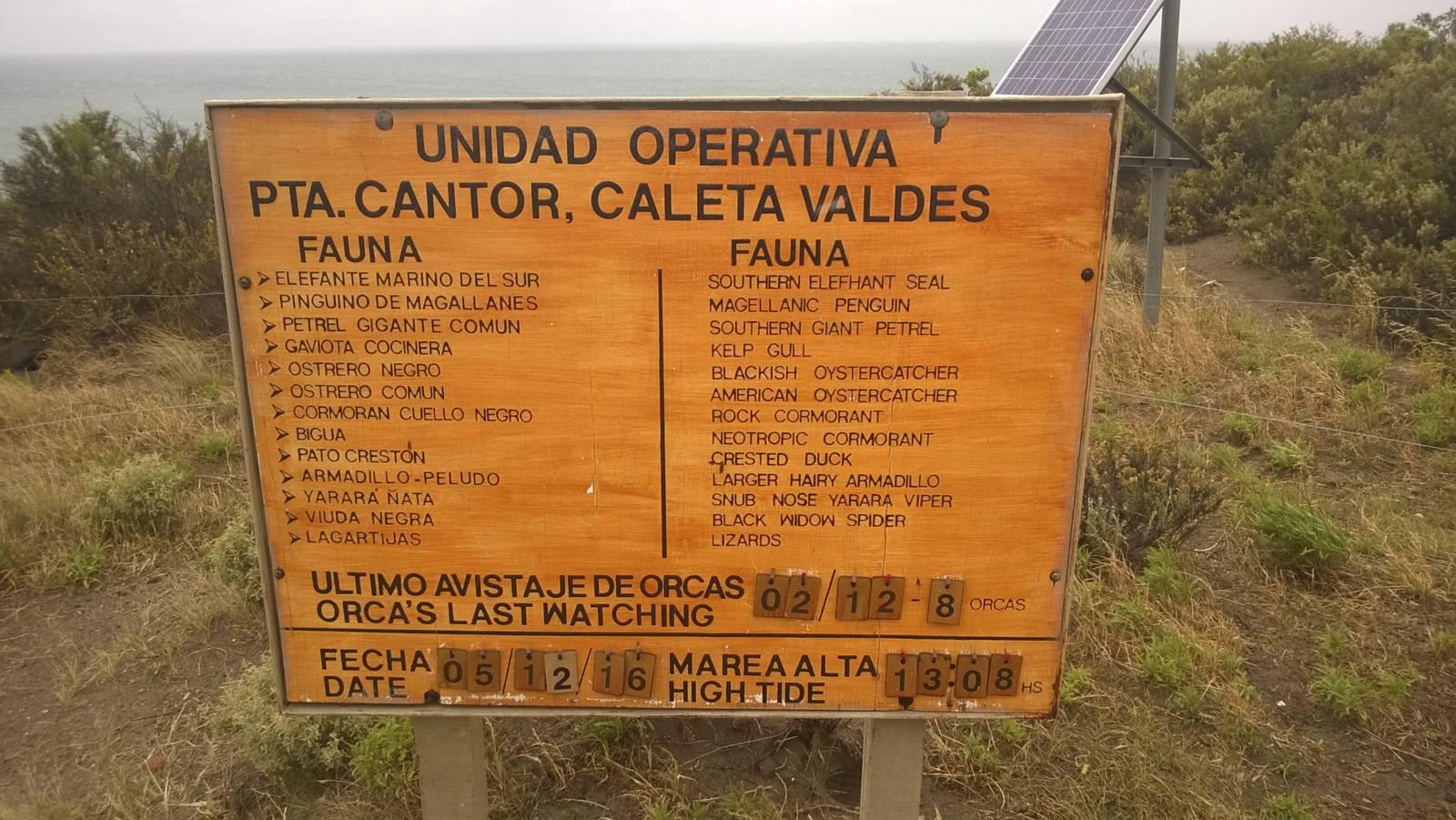 Argentina-Peninsula-de-Valdes-Orca-Marea-Alta