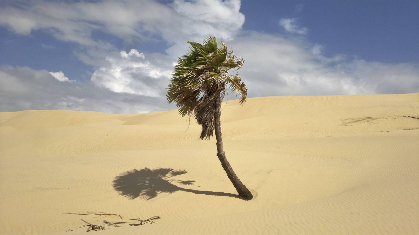 Brasile-palma-deserto-lencois-maranhenses