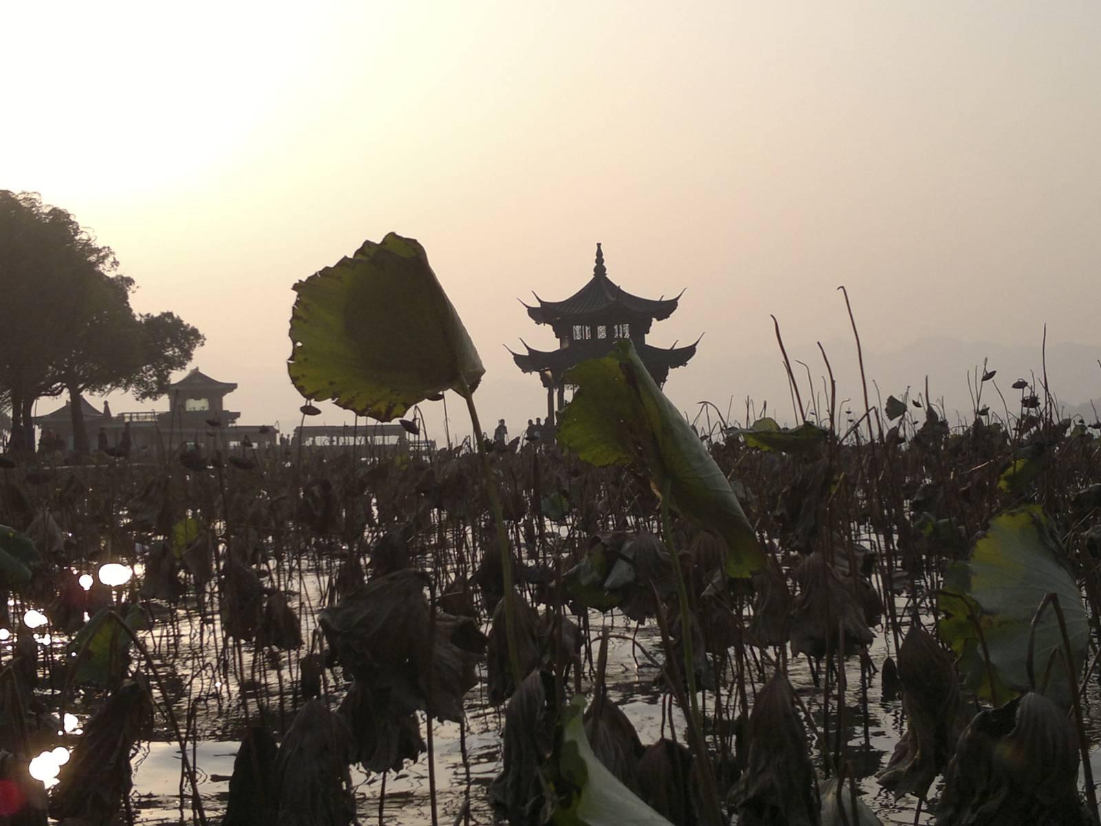 Cina-china-hangzhou-parco-fiore-di-loto