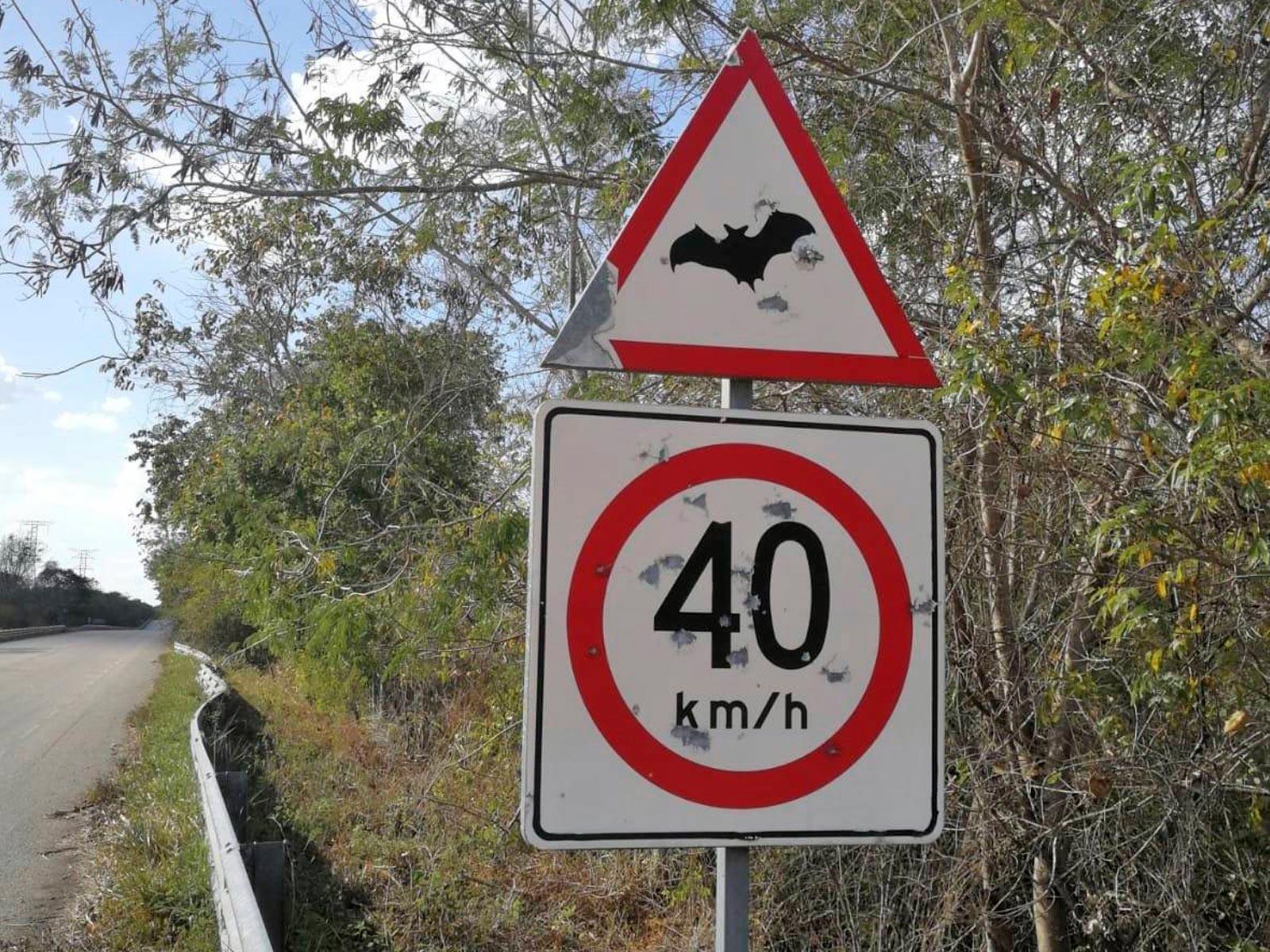 Messico-mexico-calakmul-attenzione-atraversamento-pipistrelli