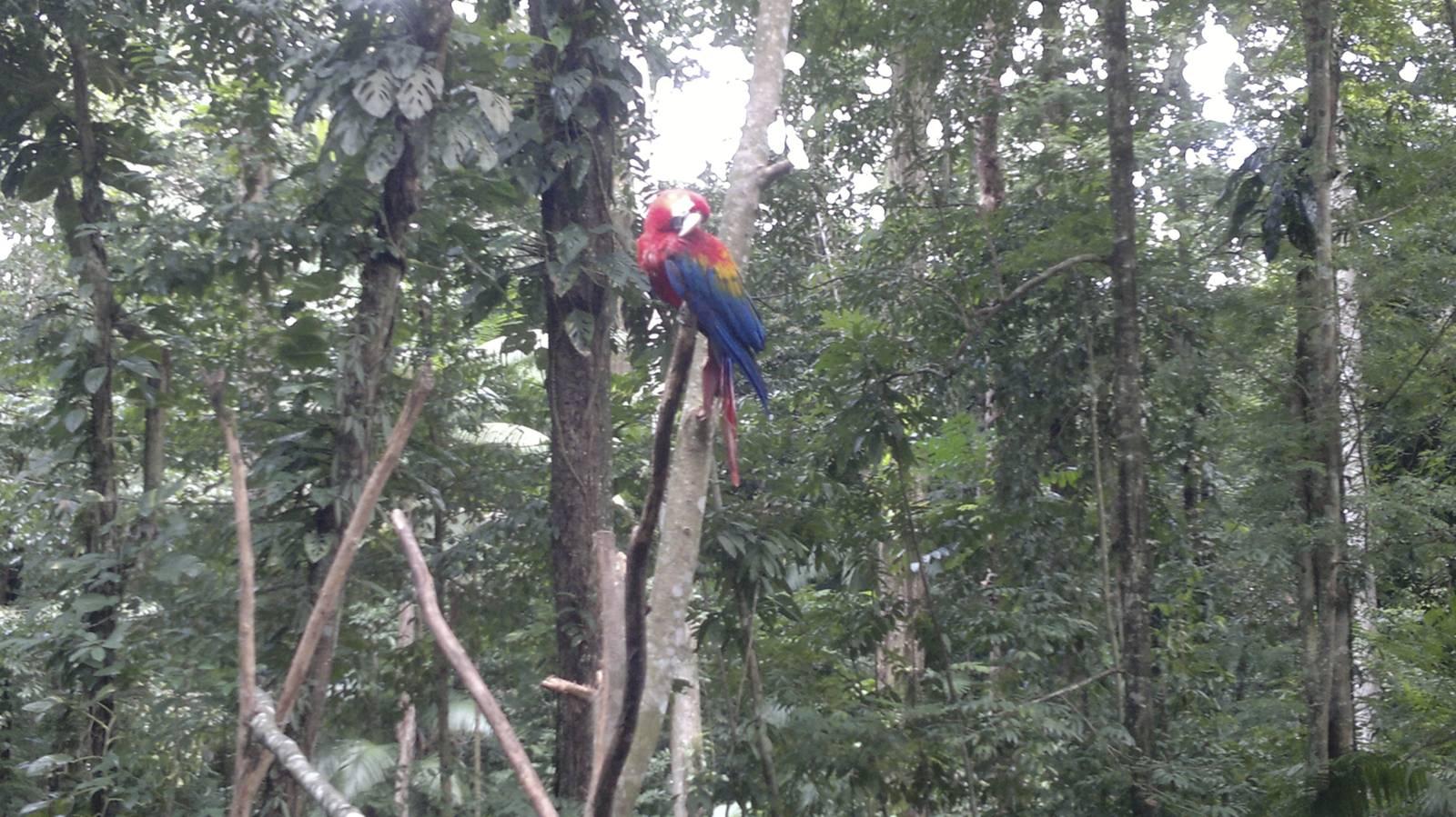 amazonia-foreste-fiumi-animali008